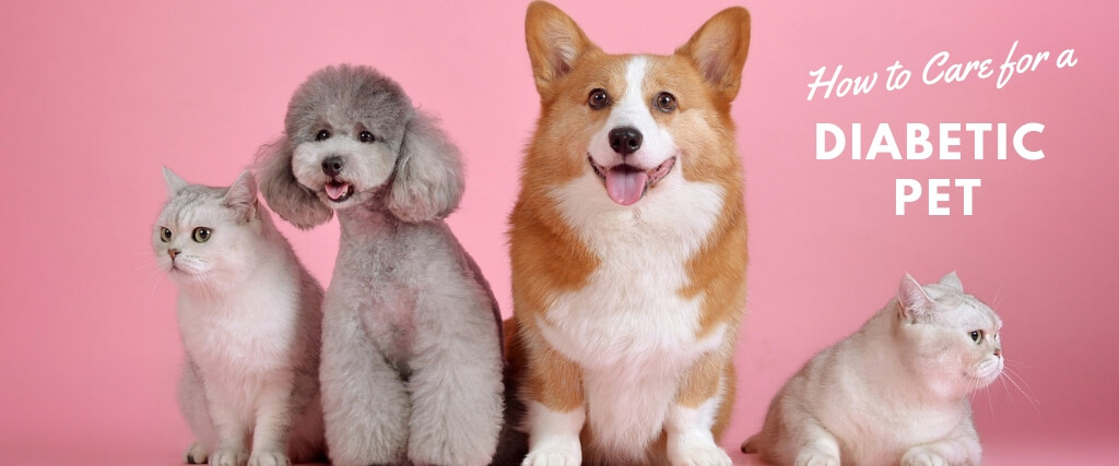 Pet Diabetes Care Market