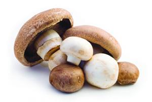 Mushroom Market NEW N
