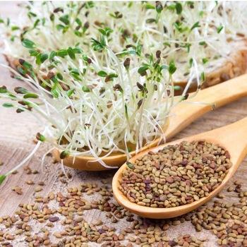 Alfalfa Seeds Market