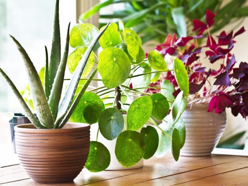 Indoor Plant Market