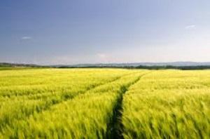 Biological Agricultures Market