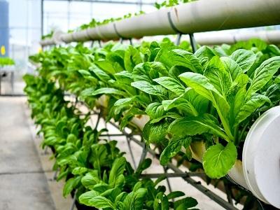 Indoor Agriculture Market