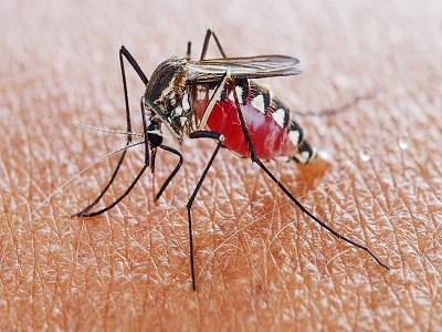 Mosquito Market