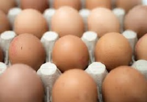 Organic Egg Market