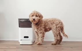 automatic dog feeders Market